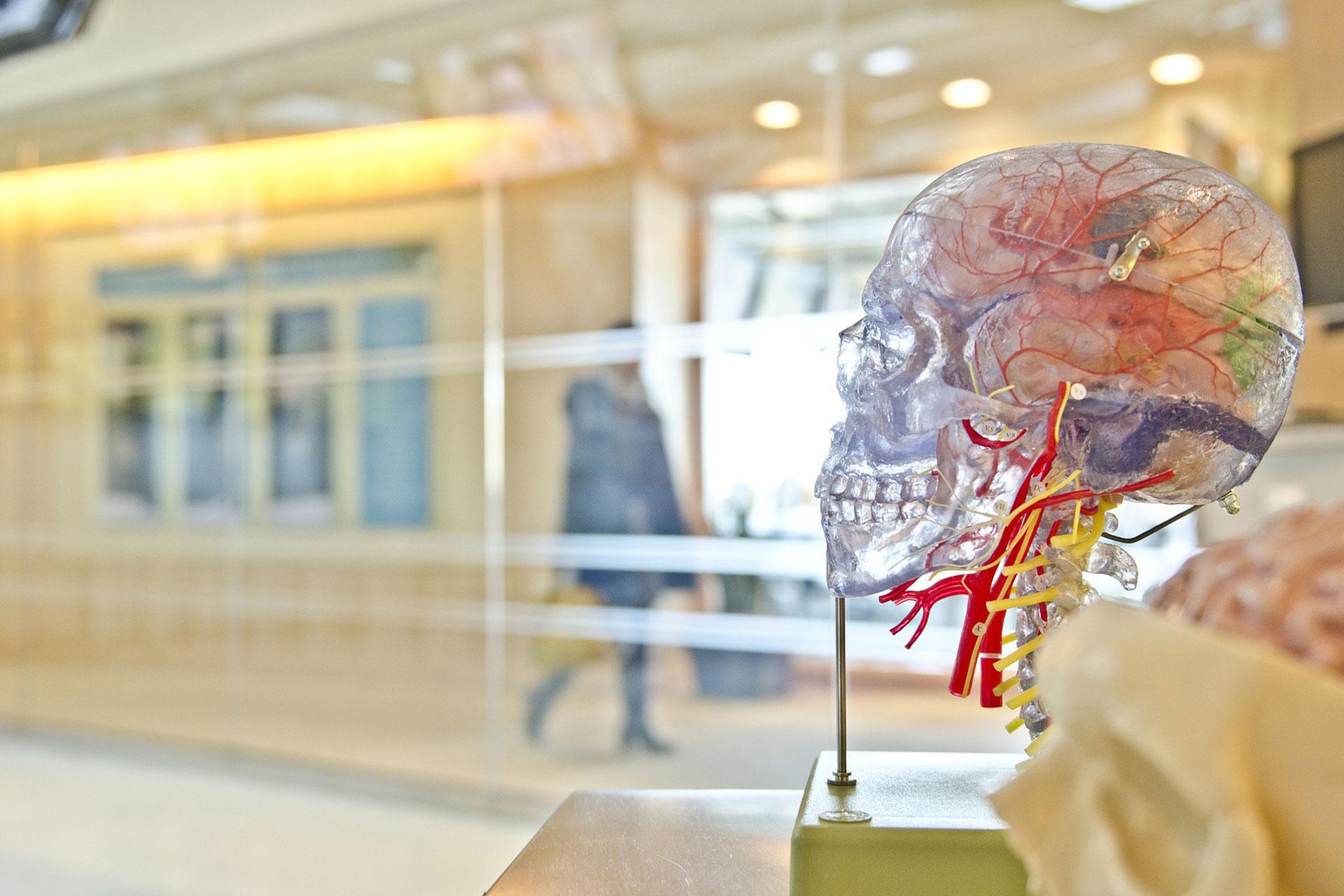 Neurokinesiología en ataxia
